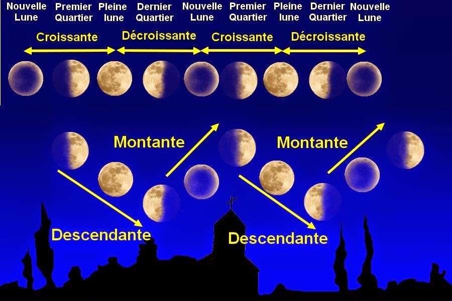 Super Deco, idées déco pas cher original Jardiner avec la lune : on vous dévoile tous les secrets