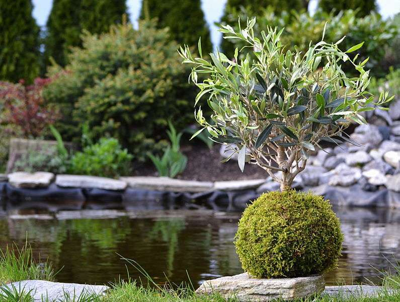 Kokedama dans un jardin japonais