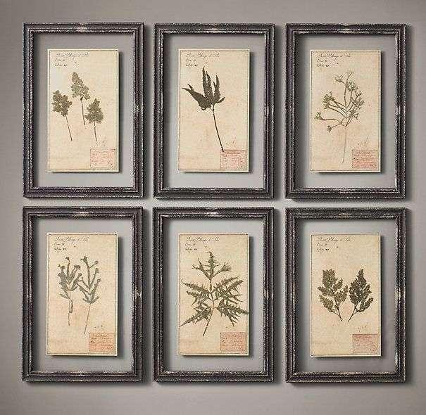 Herbarium vintage encadré
