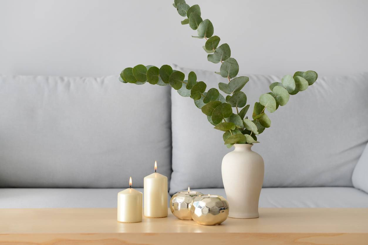 bougie à l'eucalyptus